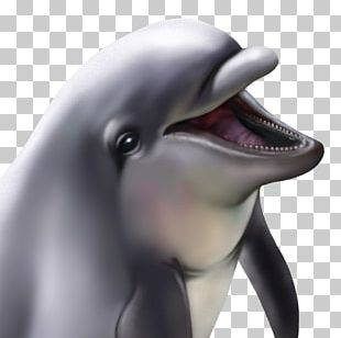 Common Bottlenose Dolphin Tucuxi Wholphin PNG