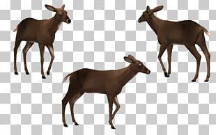 Elk White-tailed Deer Cattle Reindeer PNG