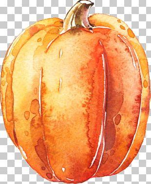 Pumpkin Calabaza Transparent Watercolor Halloween PNG