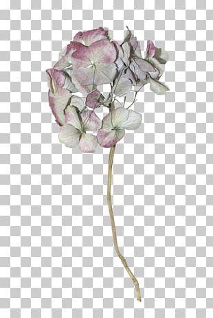Cut Flowers Floral Design Artificial Flower Petal PNG