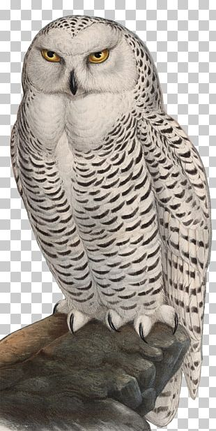 Great Grey Owl Bird Snowy Owl Watercolor Painting PNG
