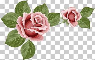 Beach Rose Flower Encapsulated PostScript PNG