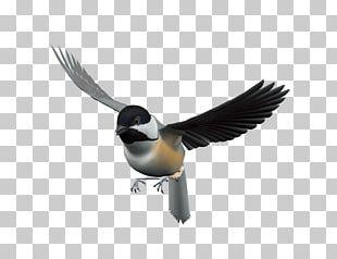 Bird Flight PNG