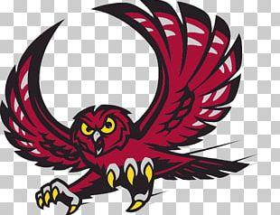 2017–18 Temple Owls Men's Basketball Team Temple Owls Football Temple University PNG