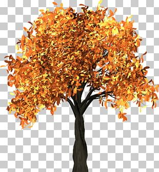 Autumn Leaf Color Tree Branch PNG
