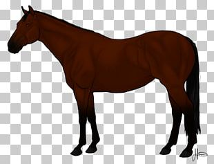 Arabian Horse Thoroughbred Andalusian Horse American Quarter Horse Mane PNG