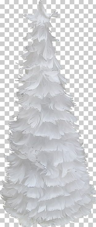 Spruce Christmas Tree Fir PNG