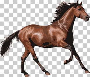 Brown Race Horse PNG