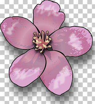 Cherry Blossom Saturn Peach PNG