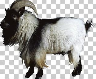 Goat Sheep Cattle PNG