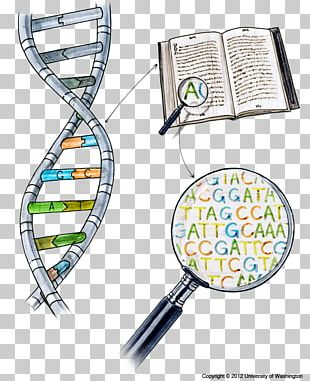 DNA Sequencing Nucleic Acid Sequence Dolan DNA Learning Center PNG