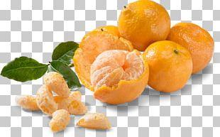 Mandarin Orange Tangerine Clementine Fruit Food PNG