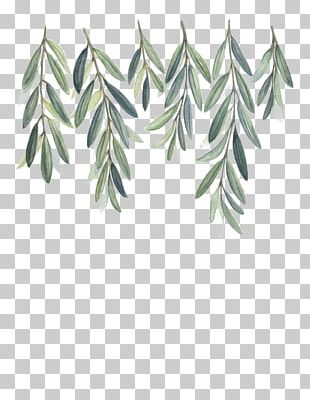 Olive Branch Watercolor Painting PNG