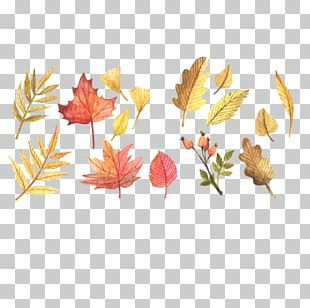 Scalable Graphics Autumn Leaf Color PNG