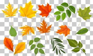 Autumn Leaves Maple Leaf Graphics Euclidean PNG