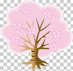 Cherry Blossom Kiyomizu-dera Tree Hanami PNG