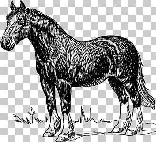 Clydesdale Horse Percheron Appaloosa Friesian Horse American Quarter Horse PNG