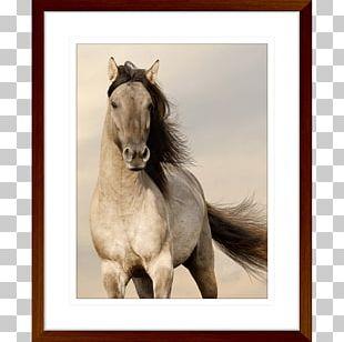 Desktop Arabian Horse Horses Free Live HD Mobile Phones Android PNG