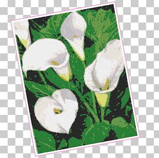 Flowering Plant Petal Flowering Plant Frames PNG