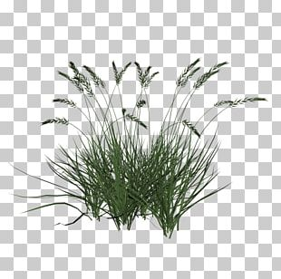 Ornamental Grass Lawn Ornamental Plant Computer Icons PNG