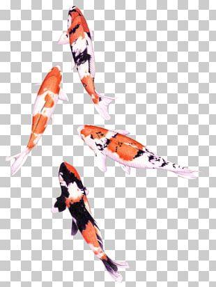 Koi Colored Pencil Drawing Watercolor Painting Fish PNG