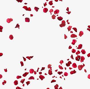 Rose Petal PNG