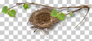 Bird Nest Bird Nest Egg Twig PNG
