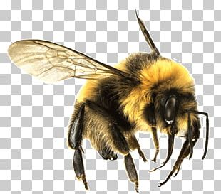 Bee Large PNG