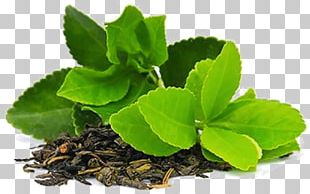 Green Tea Matcha Masala Chai Tea Plant PNG
