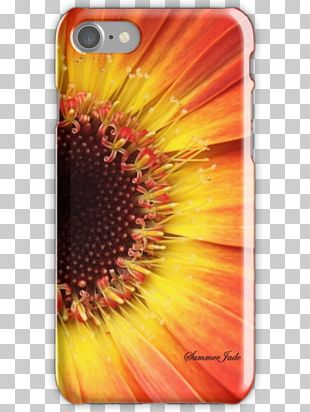Common Sunflower Transvaal Daisy Mobile Phone Accessories Mobile Phones IPhone PNG
