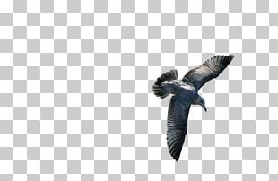 Bird Feather Owl Gulls Beak PNG