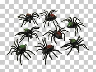 Spider Web Costume Party Halloween PNG
