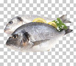 Fish Flyer Gilt-head Bream Promotion Supermarket PNG