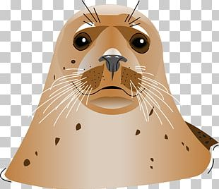 Earless Seal A Seal PNG