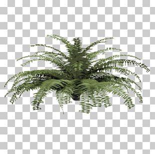Fern Plant Tree Shrub Material PNG