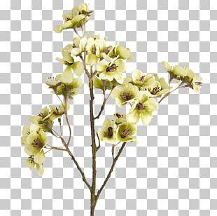 Cut Flowers Brown Color PNG