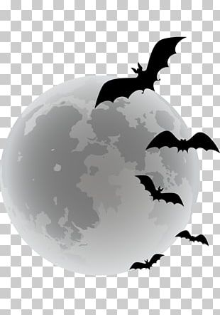 Bat Halloween PNG