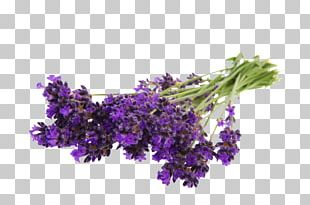English Lavender Flower Bouquet Stock Photography PNG