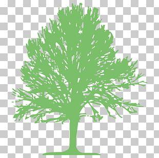 Swamp Spanish Oak Tree Computer Icons Lumberjack PNG