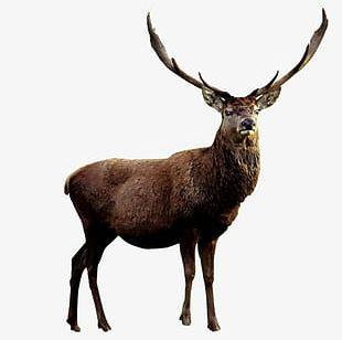 Deer Antlers Material PNG