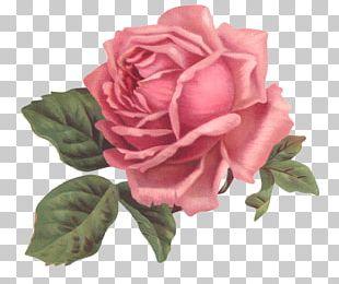 Vintage Clothing Flower Rose PNG