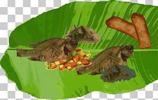 Boodle Fight Filipino Cuisine Food Banana Leaf PNG