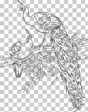 Asiatic Peafowl Bird Coloring Book Drawing PNG