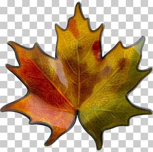 Maple Leaf Tree Plant PNG