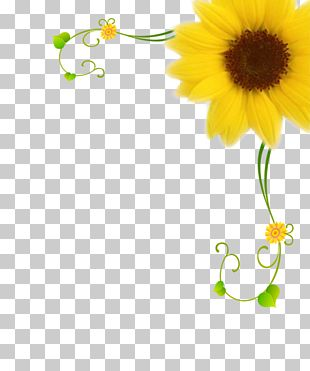 Common Sunflower Motif Pattern PNG