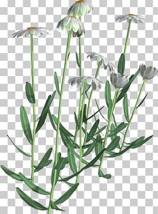 Flowering Plant Herbalism Plant Stem PNG