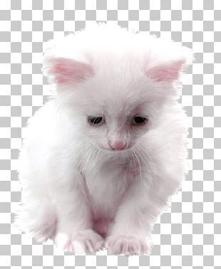 Persian Cat Asian Semi-longhair Turkish Angora Ragamuffin Cat American Curl PNG