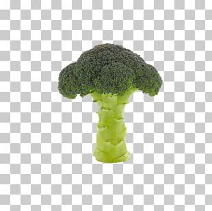 Broccoli Vegetable Cauliflower PNG