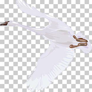 Cygnini Bird Illustration PNG