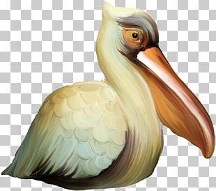Bird Flower Diary PNG